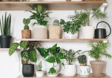 Foliage Houseplants