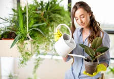 Houseplant Care