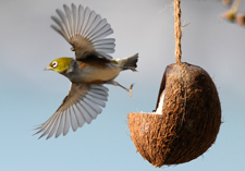 bird feeders, bird food, food, attract the birds, bird houses, Topflite