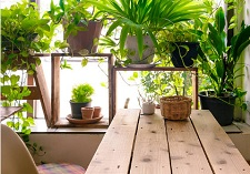 House Plants, indoor plants, houseplants